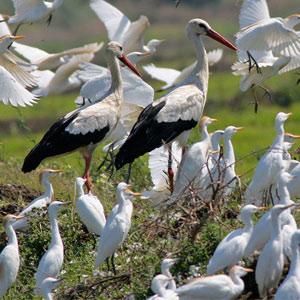 La Janda wetlands: Birdwatching
