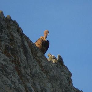 Viviendo sobre paredes de roca